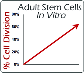 Nutrastem Active increases division of Adult Stem Cells