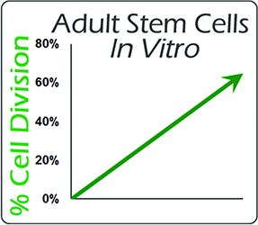 Nutrastem Cardio increases division of Adult Stem Cells